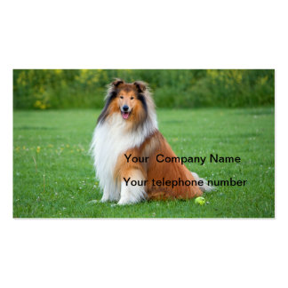 Cartão de visita bonito da foto do cão áspero do c