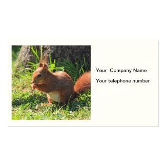 Cartão de visita bonito vermelho do costume da fot