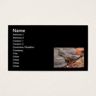Cartão De Visitas Cobra de água