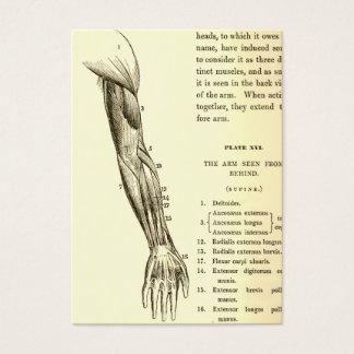 Cartão De Visitas Músculos da anatomia | do vintage do braço (cerca