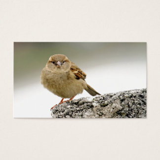 Cartão De Visitas Retrato do pardal