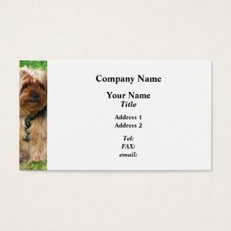 Cartão De Visitas Yorkshire terrier no parque