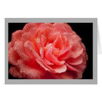 Cartão Detalhe de rosa vermelha com gotas de orvalho
