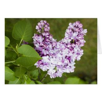 Cartão do amor do coração do Lilac do dia dos