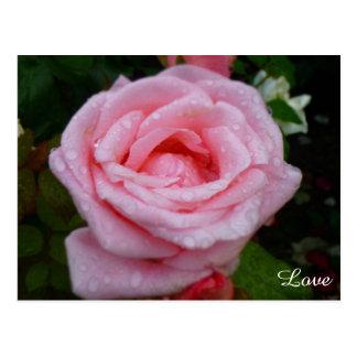 Cartão do amor do rosa do rosa cartão postal