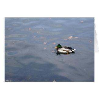 Cartão do borrão do pato selvagem