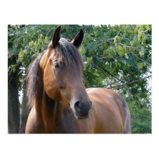 Cartão do cavalo do puro-sangue da baía cartão postal
