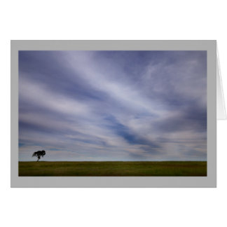 Cartão Do céu grande solitário da árvore da paisagem 50