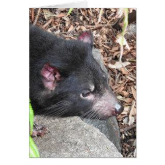 Cartão do diabo tasmaniano