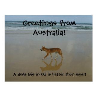 Cartão do Dingo