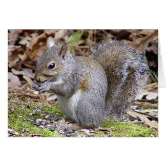 Cartão do esquilo