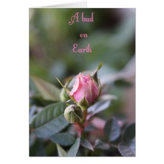 Cartão do falecimento, botão cor-de-rosa