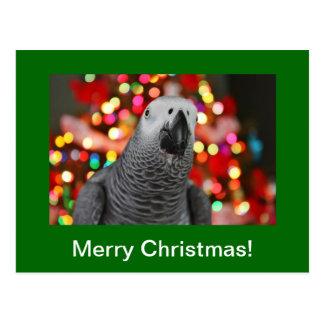 Cartão do Feliz Natal do papagaio do cinza