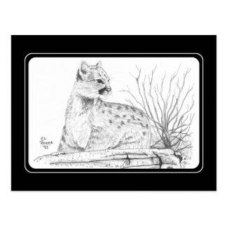 Cartão do gatinho do puma cartão postal