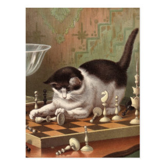 Cartão do gato da xadrez cartão postal