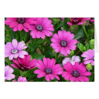 Cartão do gerânio de Cranesbill (flores cor-de-ros