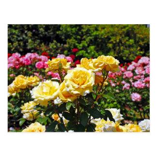 Cartão do impressão dos rosas amarelos