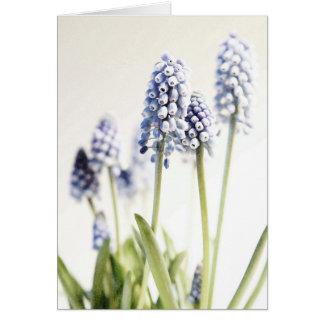 Cartão do jacinto de uva