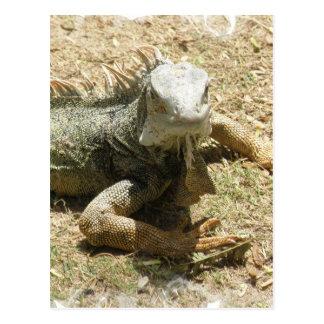 Cartão do lagarto da iguana