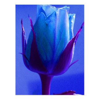 Cartão do prazer do rosa do azul - customizável