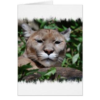 Cartão do predador do puma