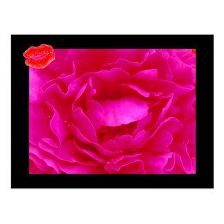 Cartão do rosa II do rosa