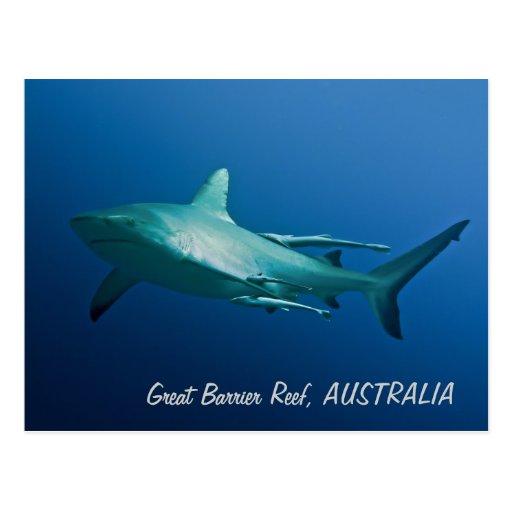 Cartão do tubarão do recife cartao postal