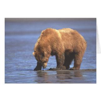 Cartão do urso de urso 2