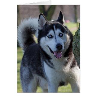 Cartão do vazio do cão do Malamute do Alasca