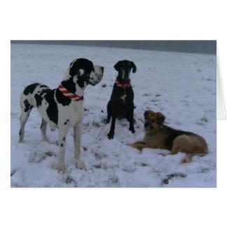 Cartão Dogge alemão, Great Dane, Cães, Natais