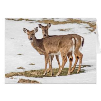 Cartão Dois cervos Branco-atados no alerta