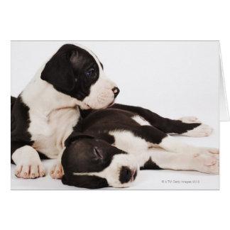 Cartão Dois filhotes de cachorro de great dane do