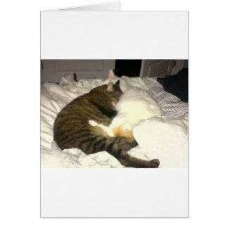 Cartão dois gatos