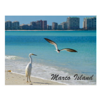 Cartão dos animais selvagens da ilha de Marco