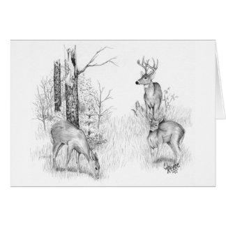 Cartão dos cervos de Whitetail