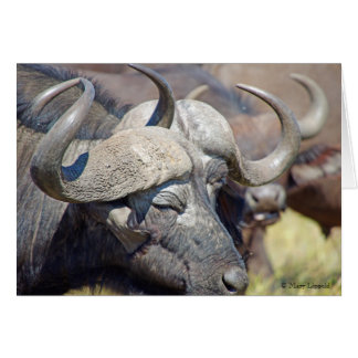 Cartão dos chifres do búfalo