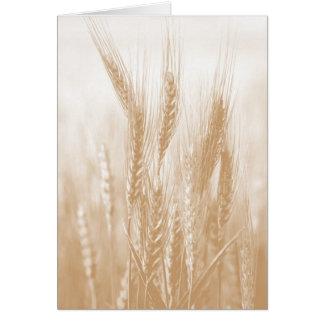 Cartão dourado do trigo