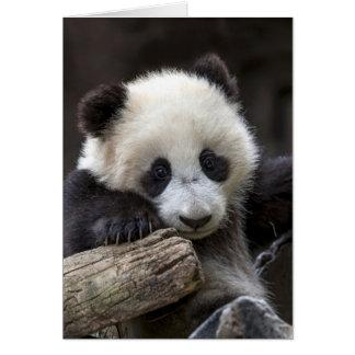 Cartão Escalada da panda do bebê uma árvore