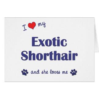 Cartão Eu amo meu Shorthair exótico (o gato fêmea)