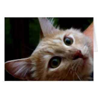 Cartão Eu ver o….Cartão do gato