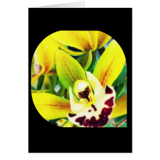 Cartão exótico do vazio da orquídea do Cymbidium