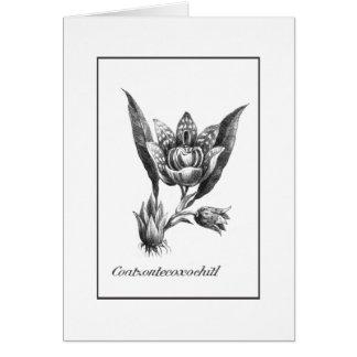 Cartão exótico gravura a água-forte da flor da