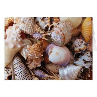 Cartão Feche acima de uma variedade de seashells