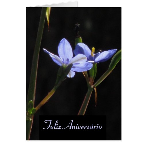Cartão - Feliz Aniversário