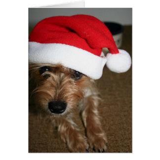 Cartão Feliz Natal (de Luna)