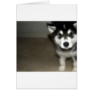 Cartão filhote de cachorro 3.png do malamute do Alasca