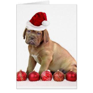 Cartão Filhote de cachorro de Natal Dogue de Bordéus
