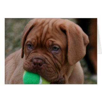 Cartão Filhote de cachorro francês do Mastiff