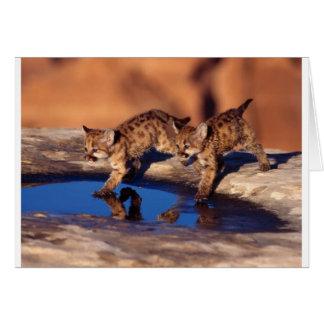 Cartão filhotes gêmeos do puma