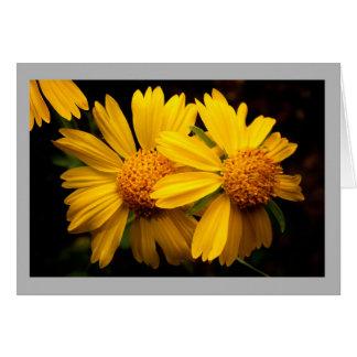 Cartão Flor 20 duas flores amarelas do coreopsis de Texas